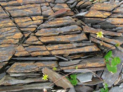 petites fleurs poussant dans les roches