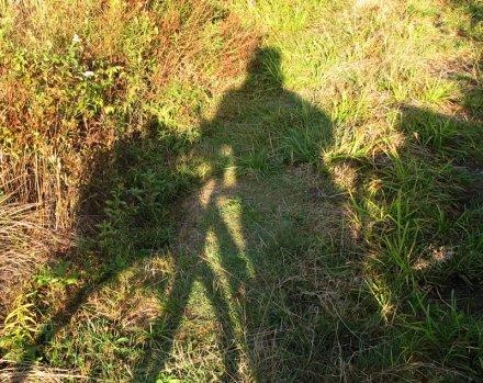 ombre sur herbes d'automne - auto-portrait