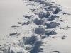 5_traces de raquettes dans la neige - snowshoe tracks in the snow