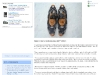 media_Artica snowshoe_blog